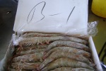 frozen white shrimp exporter