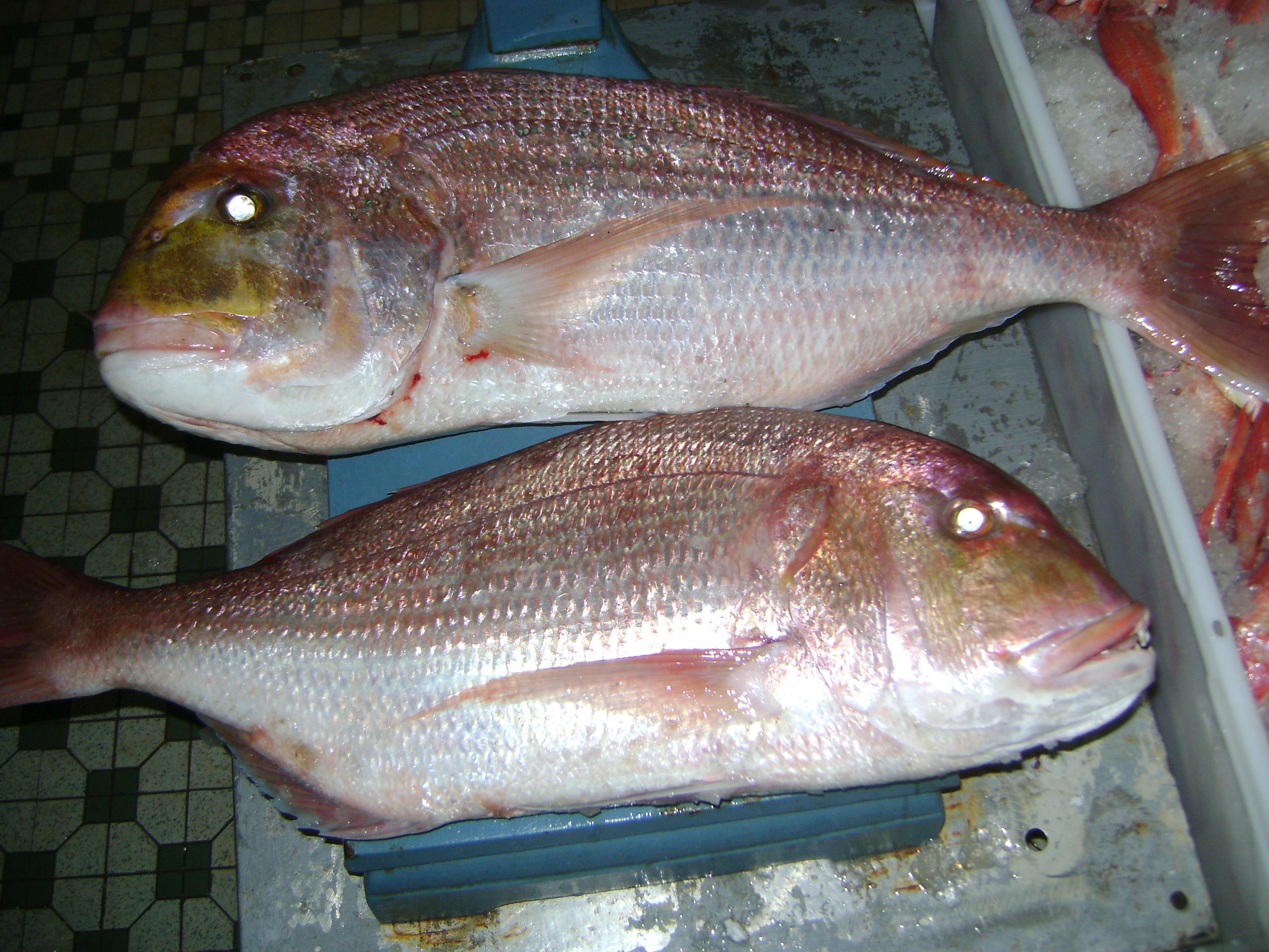 Red Seabream – Seafo...
