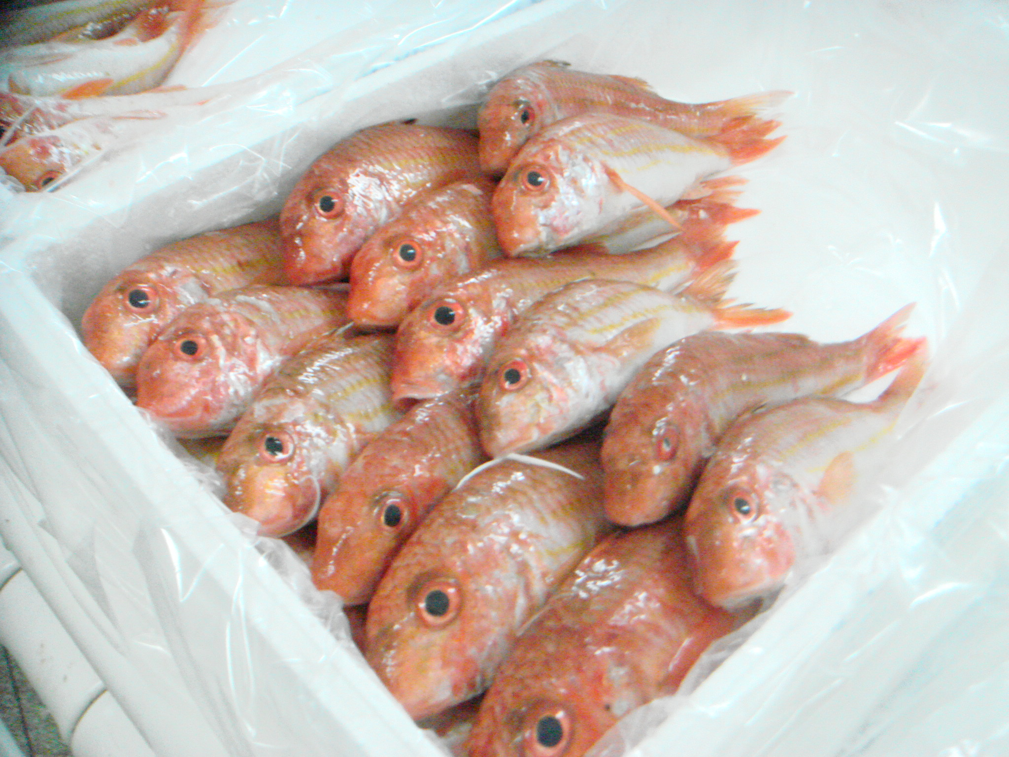 Red mullet seafoods and fish products skmrr fsbra for Red mullet fish