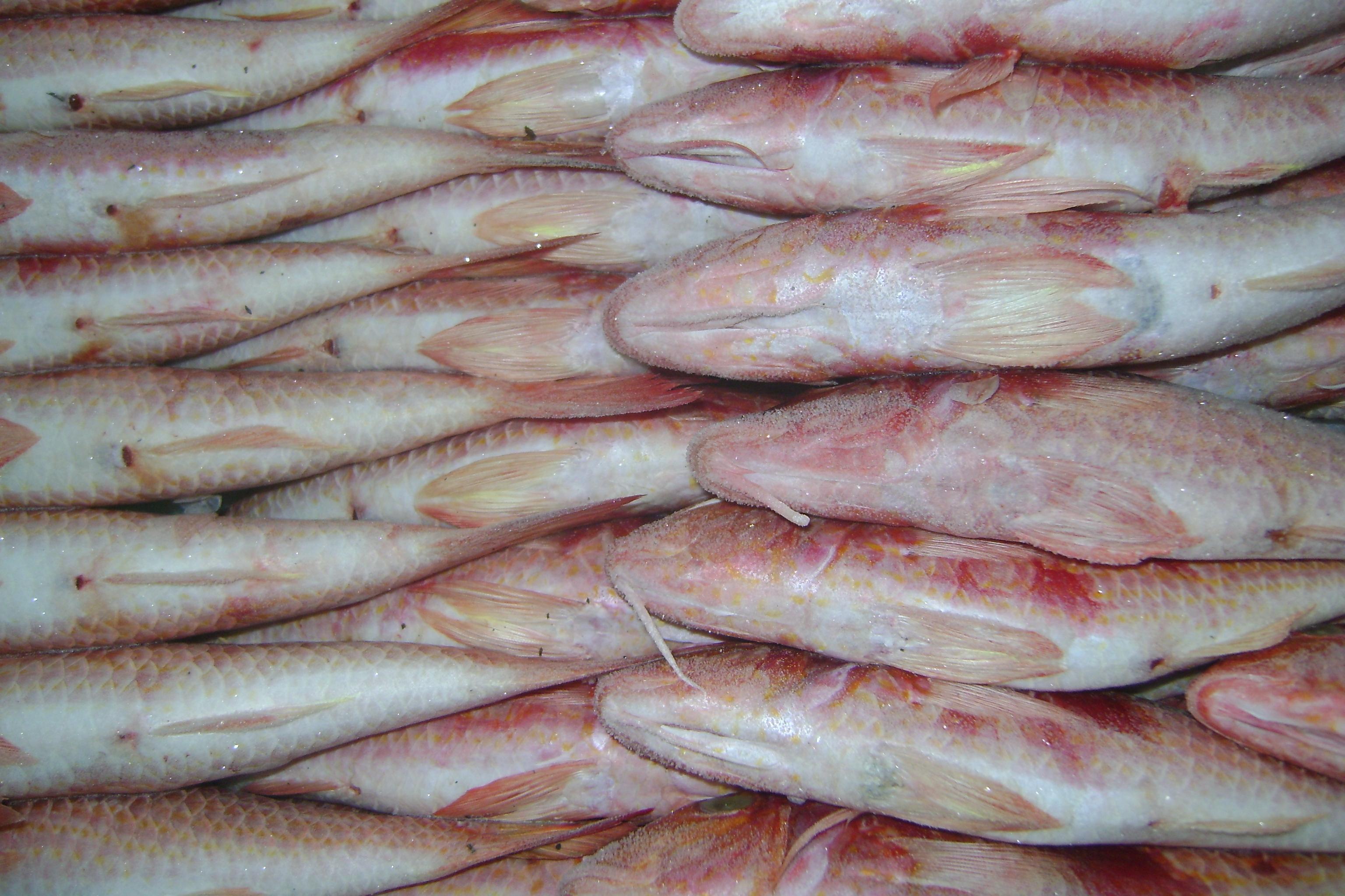 Frozen red mullet frozen goat fish frozen red mullet for Red mullet fish