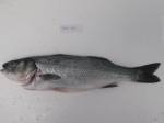 fresh sea bass manufacturer Turkey