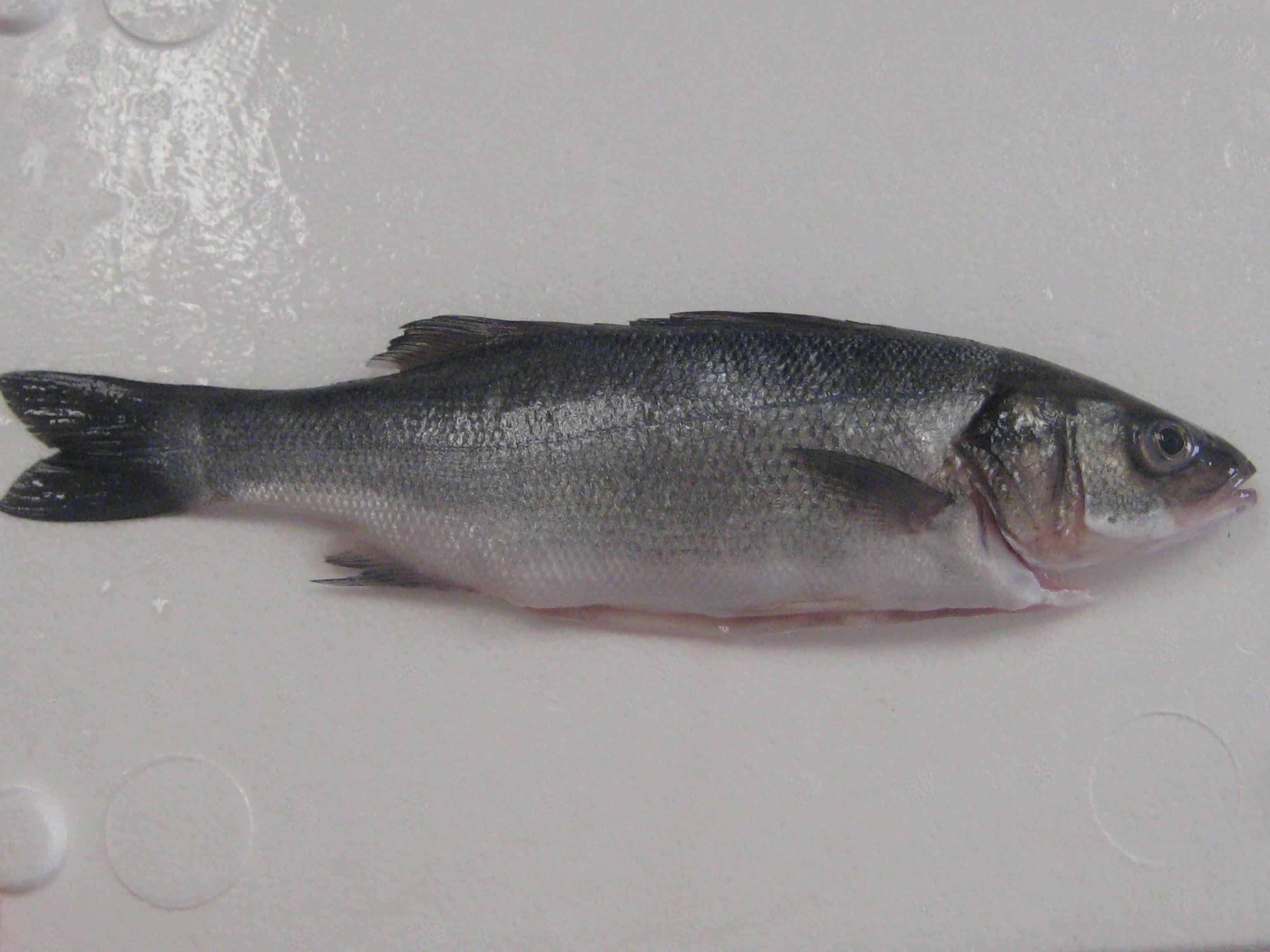 sea bass  u2013 seafoods and fish products  u2013 skmrr  fsbra