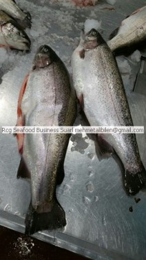 Oncorhynchus mykiss -Rainbow Trout
