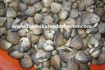 Top Shell -coquille supérieure