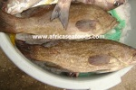 black grouper export