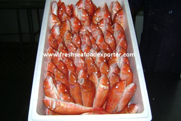 Fresh Seafood Supplier