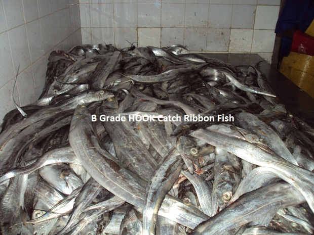 B grade Hook Catch Ribbon Fish