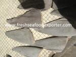 Shark Fin Exporter