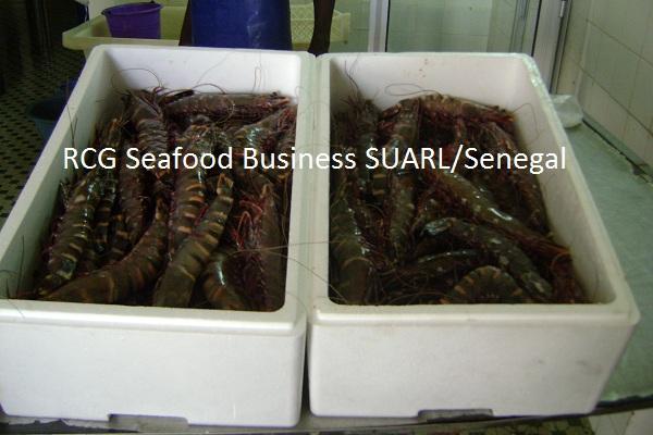 giant prawn