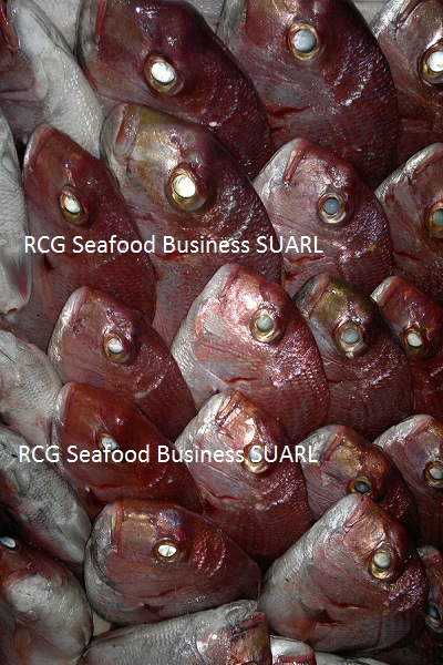 African Red Seabream
