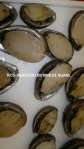 Fresh*Frozen*Dried Abalon