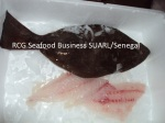African Turbot