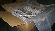 frozen horse mackerel packing