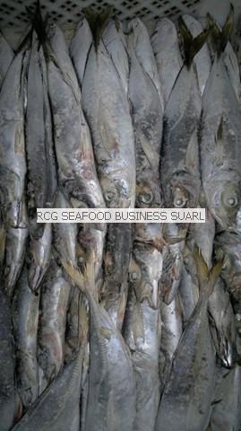 horse mackerel frozen