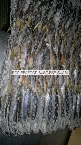 Horse Mackerel from Senegal