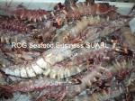 frozen tiger shrimp