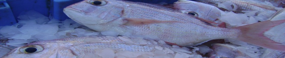 Senegal Seafoods And Fish Products