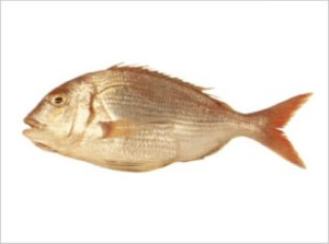 Pagrus Pagrus | Red Porgy