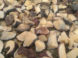 dried cymbium