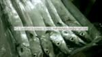 2014 Season Ribbon fish from Senegal