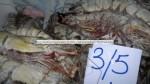 Crevette géante tigrée - Bärengarnele -