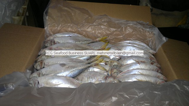 Frozen Horse Mackerel Suppiler