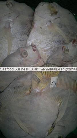 Frozen African Sicklefish