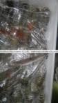 fresh-frozen green lobster tails