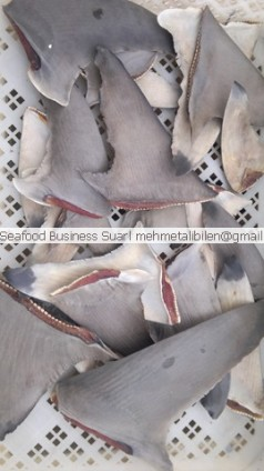 Dried Shark Fins