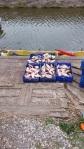 fresh-frozen carp supplier