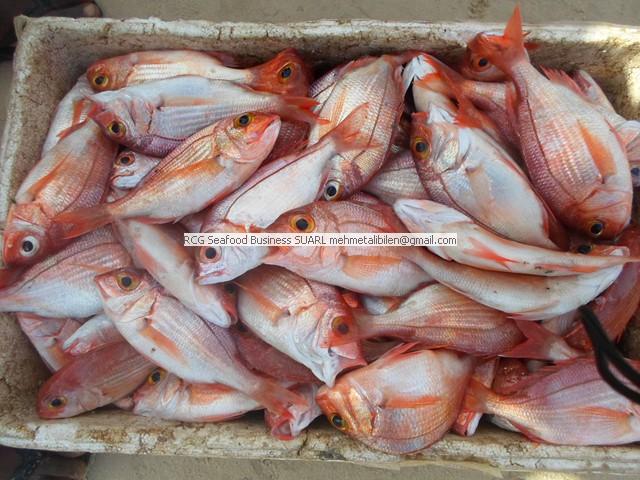 frutti di mare freschi delSenegal