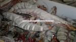 frozen big size tiger prawns