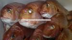 ithal taze mercan balığı