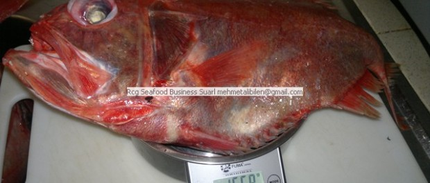 Fresh Orange Roughy Wholesale