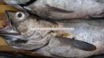 fresh-frozen hake fish