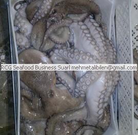 frozen octopus vulgaris
