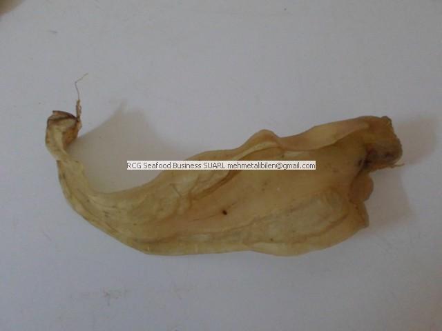 Dried Corvina Fish Maws(6)