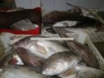 grouper alb proaspăt