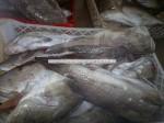 יצואן פירות ים טרי מסנגל