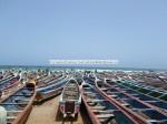 Cayar Ribbon Fish Plage