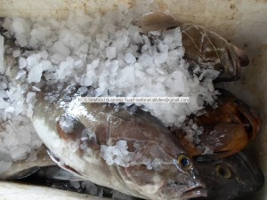 Senegal Chilled Seafoods