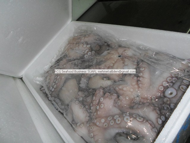 Fresh Octopus Vulgaris