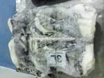 frozen giant squid legs,wings exporter