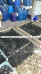 Turkish Dried sea cucumber exporter