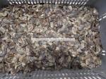 dried operculum export