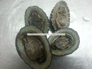 Fresh - Frozen - Dried Abalone Exporter (2)