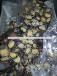 Live and Frozen Abalone