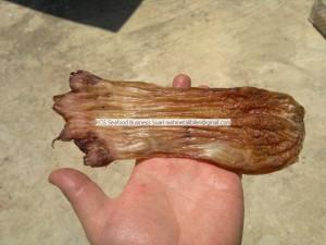 dried fish maws - grouper fish maws