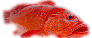 rcg seafood