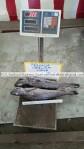 frozen hake exporter
